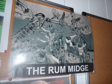 Rum midge